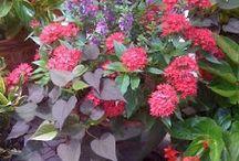 Beautiful flowers / by Linda Lewis