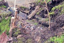 Bushcraft Survival / by Natur- und Wildnisschule Nawisho