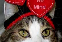 Valentine Cat / Kitties getting reading for V-Day / by Tamar Arslanian
