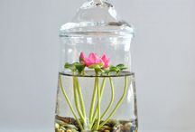 TERRARIUM and MINI GARDEN / by Isabelle Fontrin