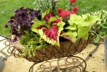 Outdoors living and Gardening / by Tish Myatt