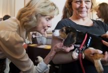 Politicos With Pets / Photos from the Roll Call photo team of lawmakers, staffers and animals on the Hill. What's not to love?  / by Roll Call - The Source for News on Capitol Hill