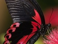 Butterflies / by artis4fashion