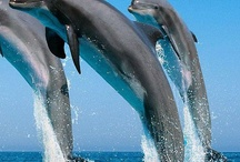 Tribute to Dolphin Friends / by Amy Leigh Mercree