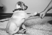 Animal Love / by Jordyn Z