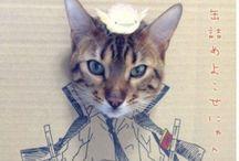 I love cats / by Bianca MV