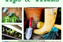 The Vegetable Patch-Tips on Gardening / Tips on how to make your garden grow / by garden-planting-tips.com