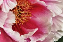 Blooms / by Kristin Wolter-Canfield