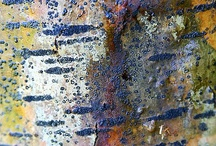 Bark / by Pam Raby