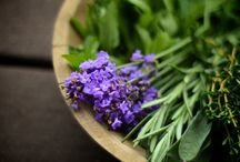 Herbal / by chanel u Ⓥ