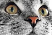 I love kitties / by Christine Shook