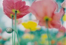 grow n blossom / by Viktorija Orlovaite