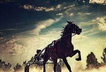 Horses / by Vicki Hatton