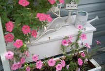 I love pink and white / by Lorie Morrow