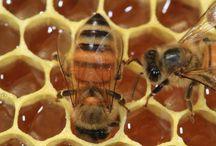 Bees / by Amanda Kramp