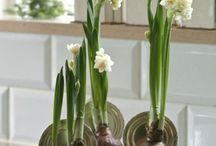 Bulb Beauty / Beautiful bulbs and ways to showcase them. / by Kat White