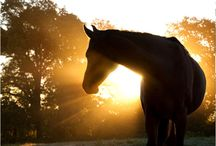 horses / by Randee Craghead
