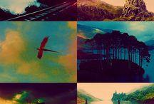 Harry Potter / by Natalie Dumm