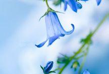 Flowers / by Holly K. Weesner