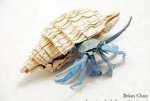 Hermit Crabs / by Oz Dean