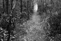Mysterious Path's / by Clyde Butcher Fine Art Photography