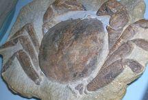 Fossils / by Flo Davila
