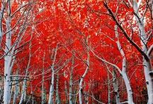 Inspiring Reds / by Kristal Norton