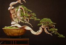 Bonsai / by Caver Sigler