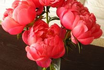 pretty peonies / by Suzanne Tildsley