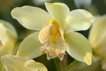 orchids / by Maria Ferelle