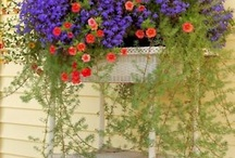 Gardening / by Cindy Stillwaggon