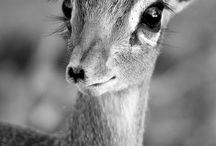 animals / by Jü Violeta