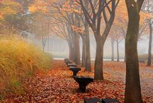Fall Colors / by Connie (Carsten) Severe ~Dragonjade~