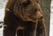 bears / by Cindy Arnold