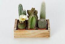lovely cactus / by Pierina Diez