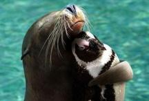 Animal Friends  ♥ / by Susan Bambino