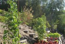 Gardening Pics, Tips, and DIY / by MagicByLeah