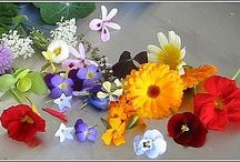 Edible Flowers / Edible Flowers are my passion / by Phoenix Martina