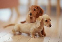 Puppies / by Jessica Parker