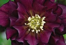 Florals / by Rosie Weinzetl