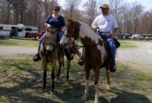 Friends of Barnfly Stables and Tack / by Tracy Beno McPherson