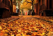 autumn / by Tearese