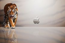 Tiger Wallpapers / Awesome Tiger Wallpapers / by Tiger Pics