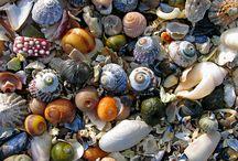 Seashells By The Seashore / by Sarah Foltz