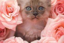 Cute Animals / by Sue LaPoint DeLeonardis
