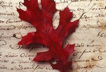 Autumn / by Svetlana Demianenko