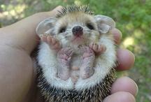 Cute! / by Lauren Bush