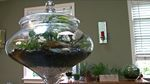 Terrarium / by Gardens on the Prairie