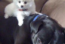 Doggie treats / by Carol Kirkwood