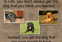 K9 Lessons for Life / by Paula-A Balanced